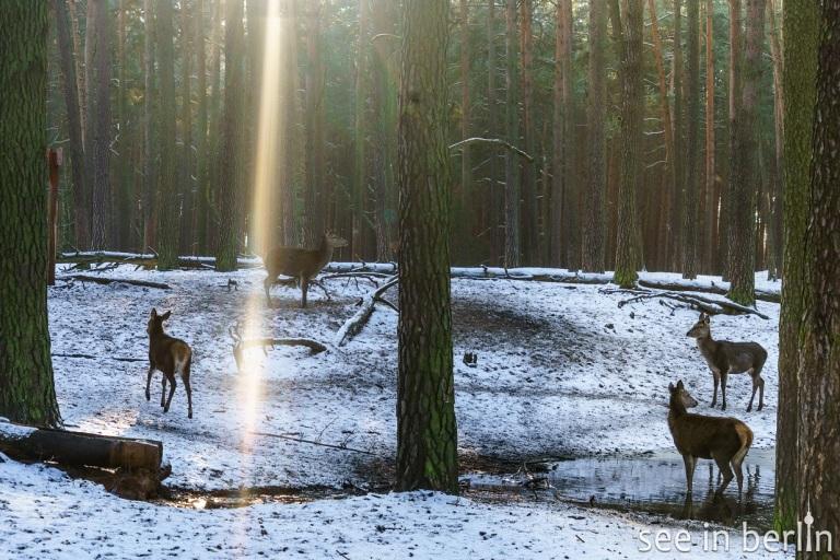 berlin schorfheide wildpark (13).jpg
